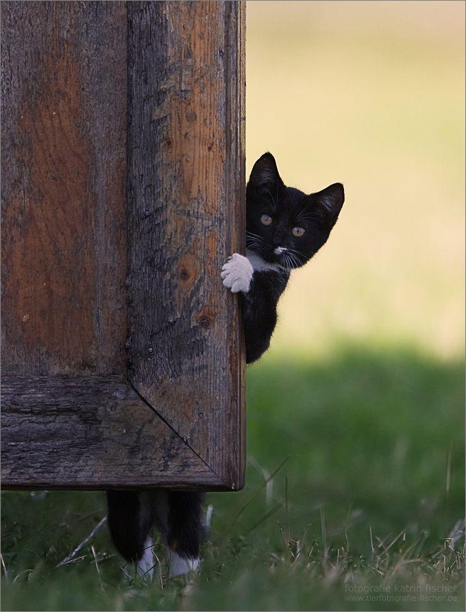 cat00069_20150329231712ea9.jpg