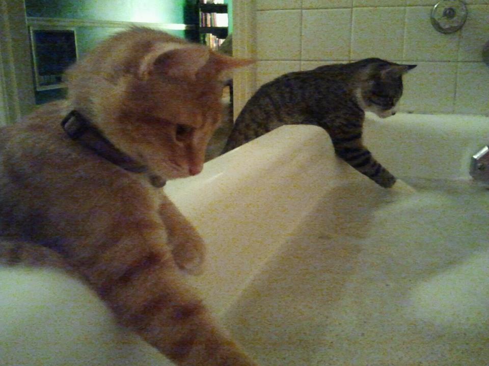 cat00072.jpg