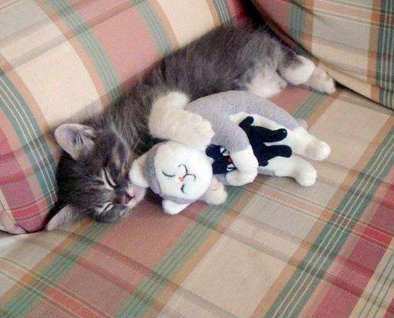 cat00104.jpg