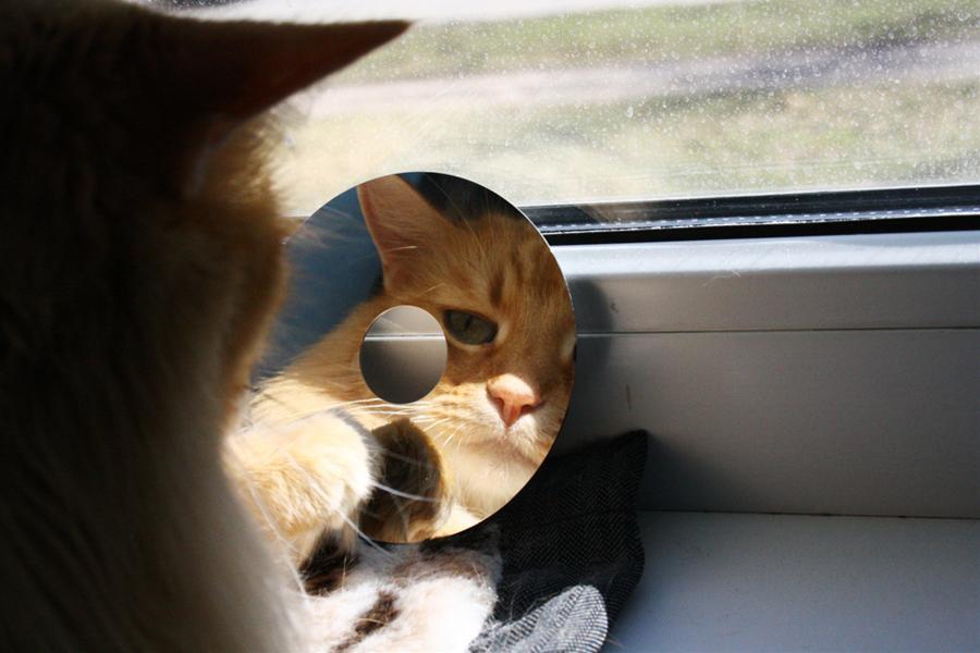 cat00119.jpg