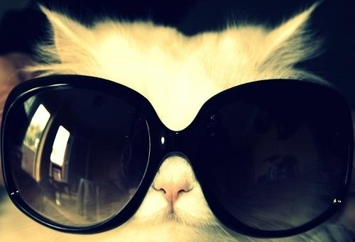 cat00441.jpg