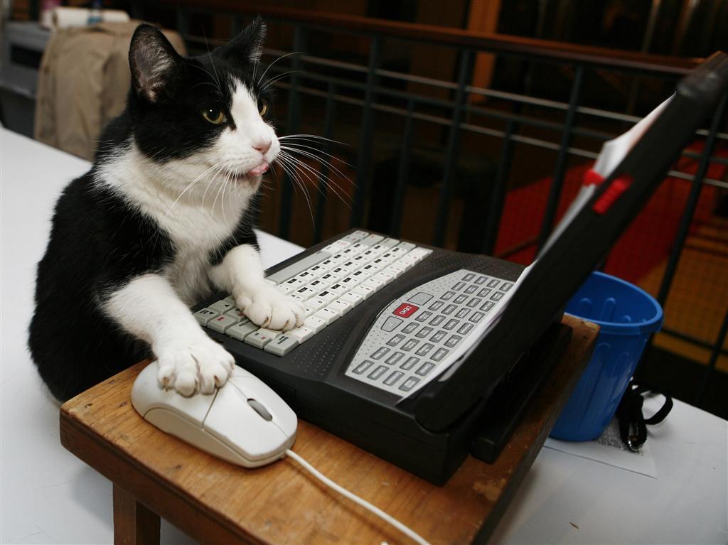 cat00476.jpg