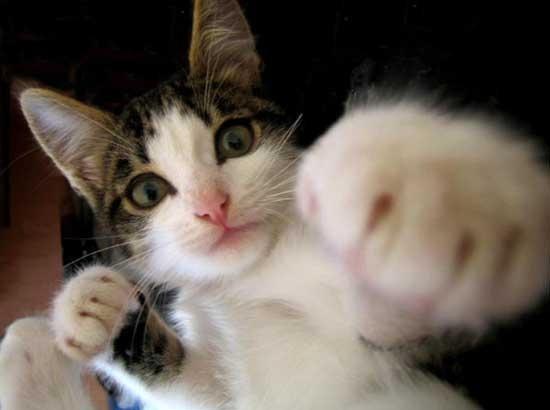 cat00875.jpg