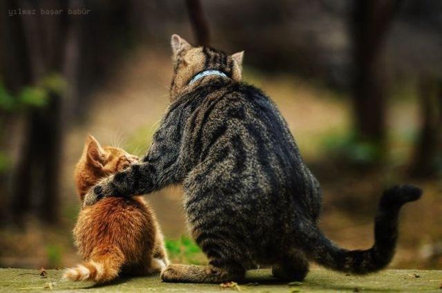 cat00888.jpg