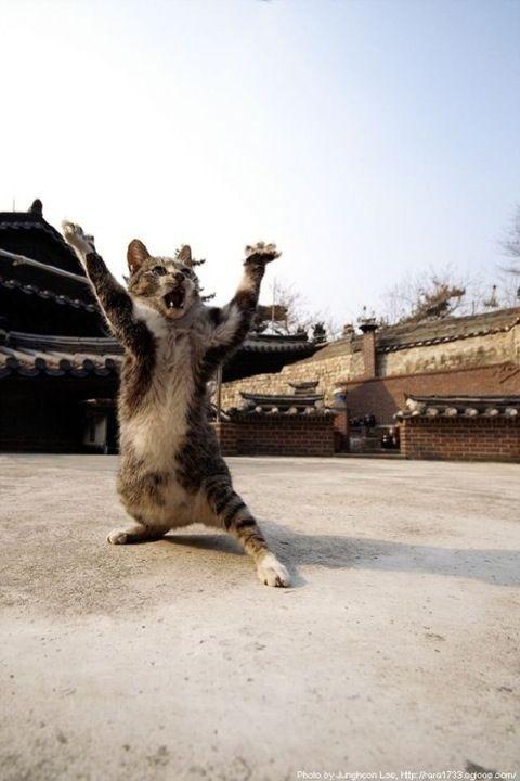 cat01450.jpg